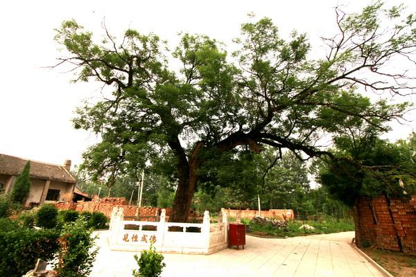 拜访树主题墙幼儿园